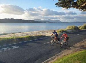 Kauri-Coast-Cycleway-2